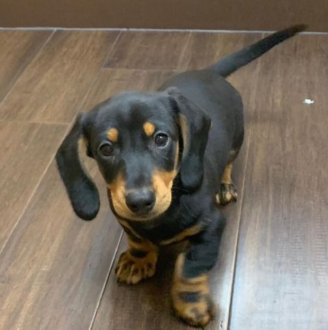 Puppies For Sale Puppies Dog Lovers Animals