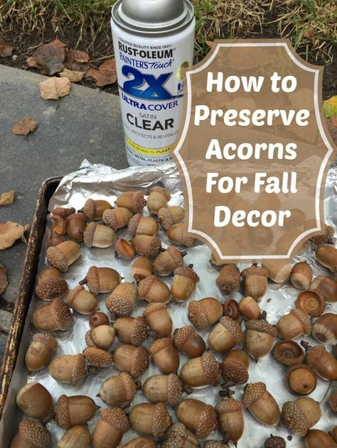 preserving acorns for fall decor (Easy Tutorial) How to preserve acorns for a lot of fall decor DIY projects. Great Thanksgiving decorations tooHow to preserve acorns for a lot of fall decor DIY projects. Great Thanksgiving decorations too Acorn Crafts, Pine Cone Crafts, Crafts With Acorns, Leaf Crafts, Pumpkin Crafts, Deco Nature, Autumn Decorating, Budget Decorating, Fall Projects