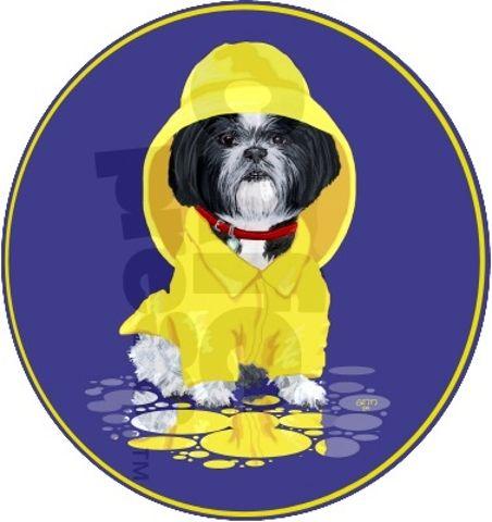 Shih Tzu Puppies Of Shih Tzu Garden Northern Bay Area Ca In 2020 Shih Tzu Puppy Shih Tzu Dog Shih Tzu
