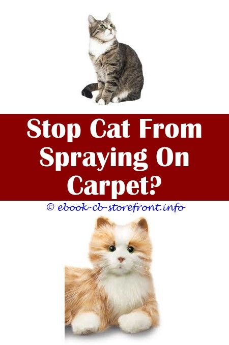 8 Good Clever Tips Cat With Grudge Sprays Stuff Cat Deterrent Spray For Plants Cat A Pult Spray Best Deterrent Spray For Cats Diy Anti Itch Spray Condition En 2020 Bebe