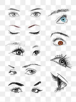 عيون الإناث والحواجب ناقلات الحرة عيون المرسومة بالأبيض والأسود ناقلات العين ناقلات ناقلات Png وملف Psd للتحميل مجانا Eyes Clipart Vector Free Eye Illustration