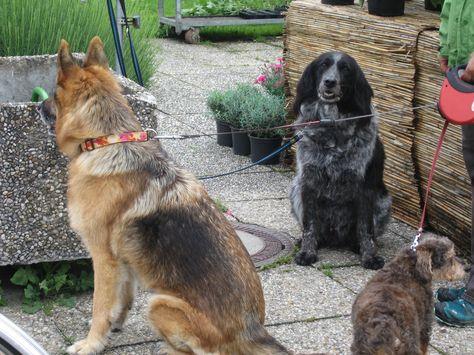 Tres cachorros.