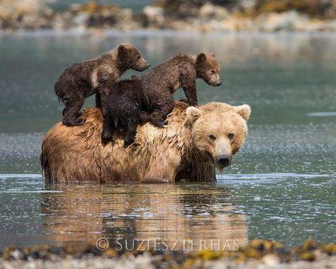 Cute MOM and BABY BEARS Photo Print, Baby Animal Photography, Wildlife Photograph, Nursery Art, Moth