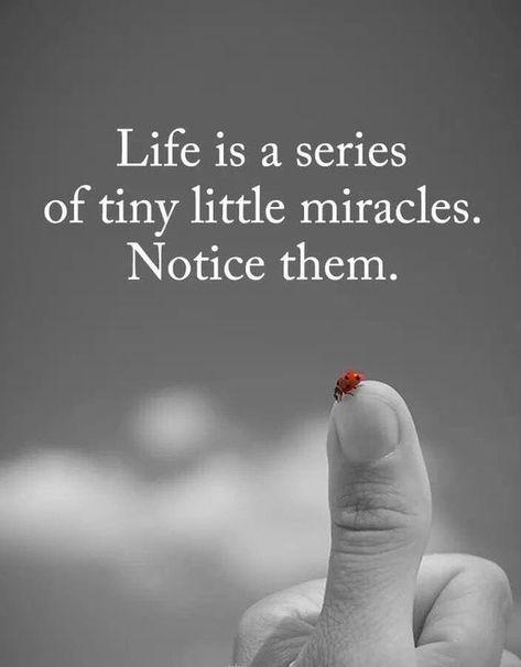 #Miraclelifequotes #Beingdeepobserver #Observantquotes #Deepquotes #Lifequotes #Dailyquotes #Quotes #therandomvibez