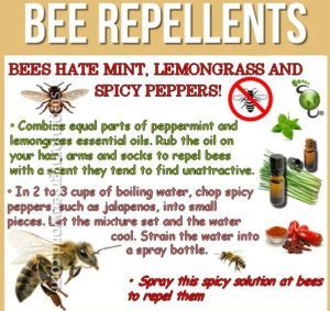 Specific Information About How To Make A Diy Bee Repellent Bee Repellent Getting Rid Of Bees Repellent Homemade