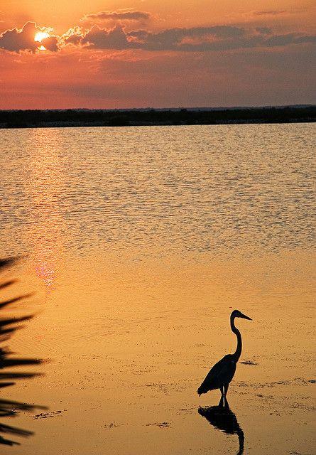 Sunset Merritt Island Wildlife Refuge    by DancinT