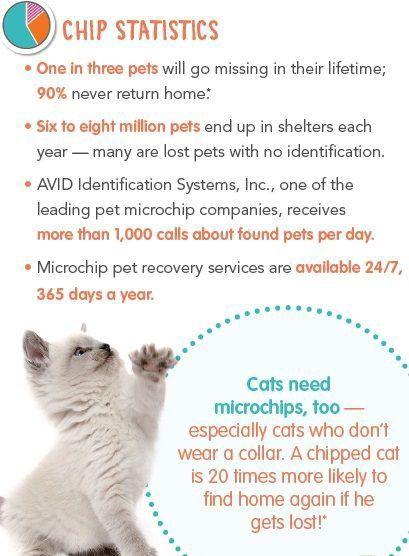 Adopt Sprinkes On Petfinder Bengal Cat Cat Adoption Brown Cat