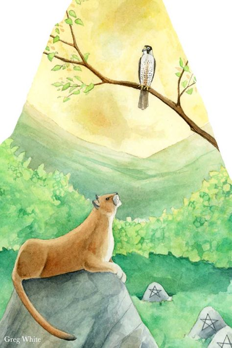 A detailed closeup from the Nine of Pentacles from the WilderWoven Tarot. #cougar #hawk #wilderwoventarot #gregwhite #natureart #watercoloranimals #solidfoundations #tarotcards #tarotdeck #birds #largecats