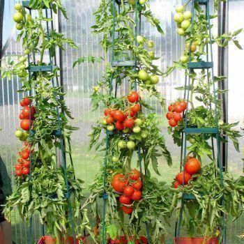 10 Things To Know Before You Plant Tomatoes Planting Tomatoes