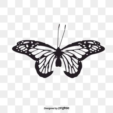Vector Black And White Butterfly Fengtai Butterfly Silhouette Butterfly Clipart Vector Butterfly Butterfly Png And Vector With Transparent Background For Fre In 2021 Butterfly Black And White Butterfly Illustration White Butterfly