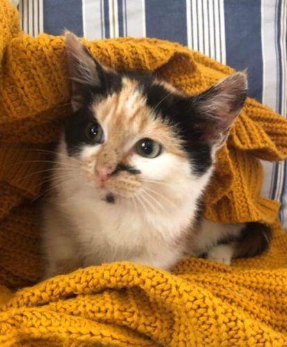Lost Kitten Missing From Ruanminor Cornwall Uk Cat Uk Kittens Cats