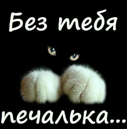 Pin By Mila Darenko On Garmoniya Dushi Love You Humor Feelings