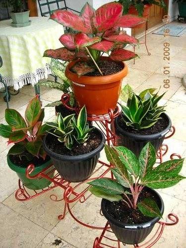 Dinomarket Pasardino Rak Standing Pot Besi Tanaman Hias Tanaman Pot Bunga Kebun
