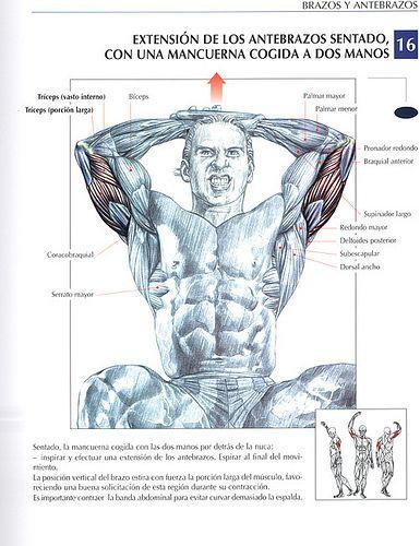 110 Ideas De Gym Ejercicios Musculacion Ejercicios Musculares Ejercicios De Entrenamiento