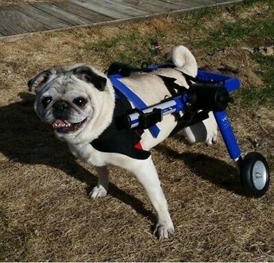 Dog Wheelchair Medium For Dogs 26 50lbs By Walkin Wheels 4 Wheels Affilink Petsupplies Dogs Medium Dogs