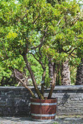 Epingle Sur Arbres Et Arbustes