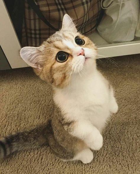 #cats #cat #kitty #meow #cat#cats #cutecat #cutecats #kitten #kitties #kittens #adorable #cuteness #cutenessoverload #cutenessoverloaded