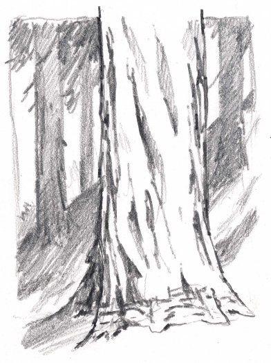 How To Draw Trees Vertical Cracks John Muir Laws Tree Drawing Tree Trunk Drawing Tree Trunk Painting