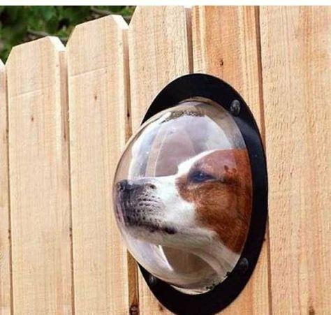 Clôture de jardin innovante à hublot pour le chien