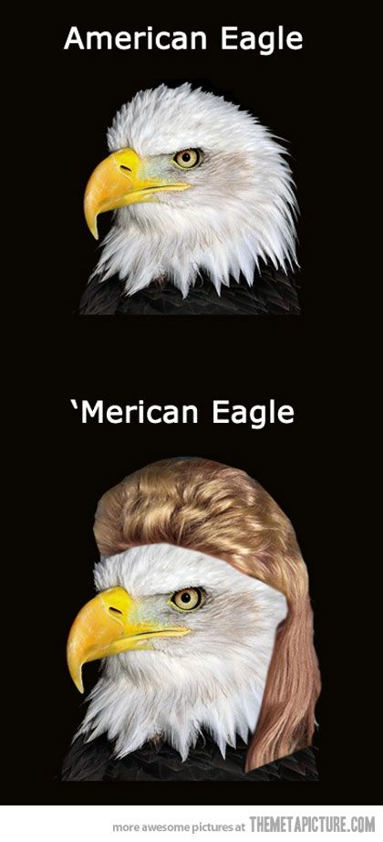 'MERICA!! cannot stop laughing.