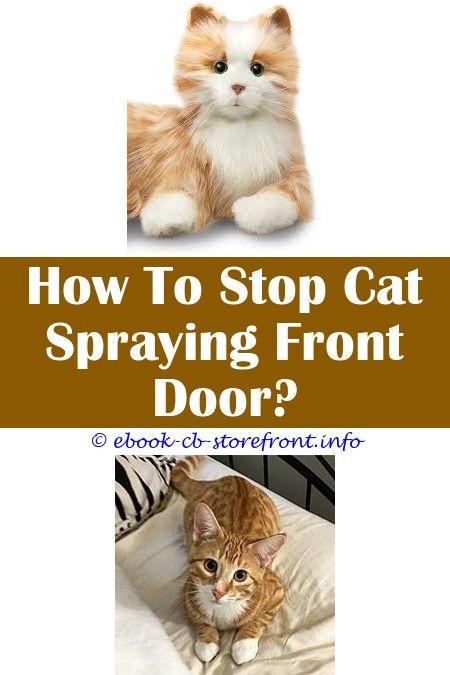 33e14a12d7e6e142a7f166b115c38216 - How To Get Rid Of Cat Spray Smell Under House