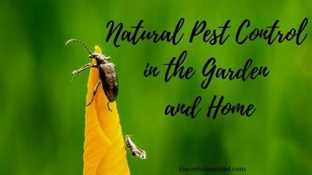 33f220288685e0a8f9872775ea397d5a - How To Get A Pest Control License In Georgia