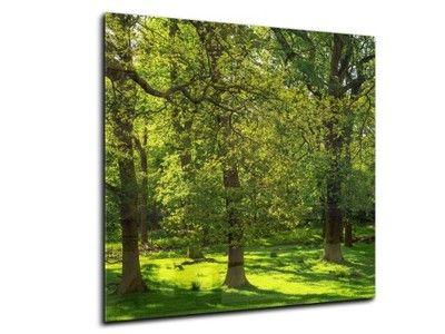 Panel Lacobel Las Allegro Pl Wiecej Niz Aukcje Najlepsze Oferty Na Najwiekszej Platformie Handlowej Plants Tree Tree Trunk