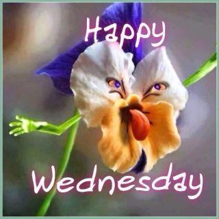 36 Funny Happy Wednesday Memes Wednesday Memes Funny Wednesday Memes Happy Wednesday