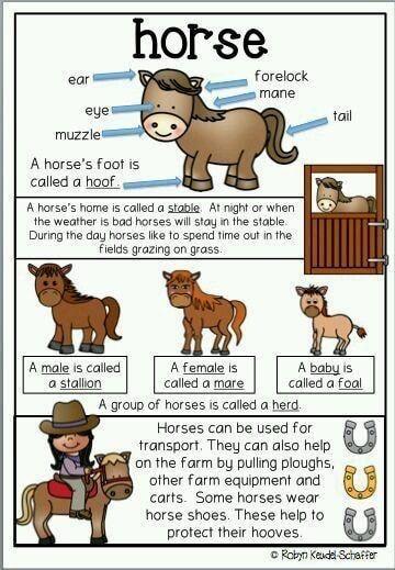 Animals Description Farm Animals Theme Farm Theme Preschool Farm Preschool
