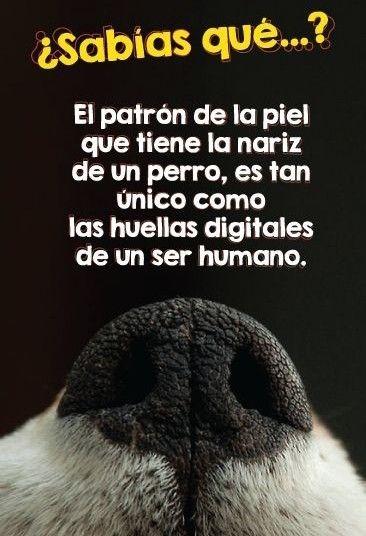Pin De Andrea Moyano En Sabías Que Mascotas Tiernas Perritos Adorables Mascotas