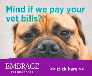 Why Pet Insurance For Surgeries And Emergencies Pet Insurance