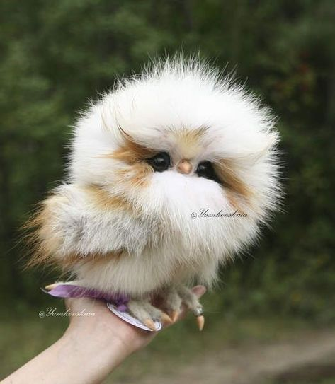 16 Adorable and Ultra Fluffy Animals Will Melt Your Heart - I Can Has Cheezburger?