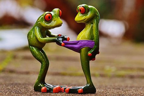 Funny Animal Pictures 2019, Are animals funny? Absolutely! while animals are often looked at for being cute companions, they can also be downright hilarious. #joke #funny #animal #frog