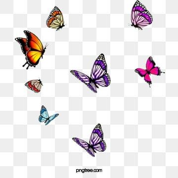 Purplish Red Colored Butterflies Swarm Butterfly Red Butterfly Purple Butterfly Png Transparent Image And Clipart For Free Download Red Butterfly Butterflies Vector Purple Butterfly