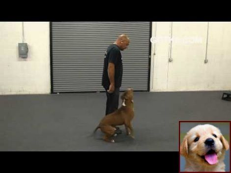 Clicker Dog Training House Training A Puppy In 7 Days And Clicker