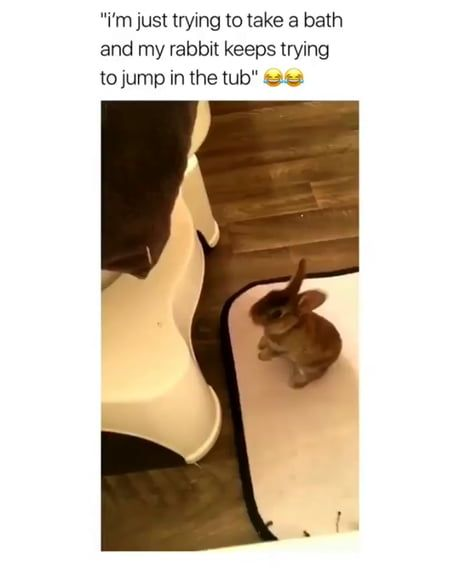 Bun keeps trying to hop in its human's bath.