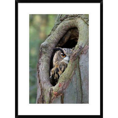 """Global Gallery 'Eurasian Eagle-Owl Looking Out from a Tree Cavity, Netherlands' Framed Photographic Print Size: 42"""" H x 30"""" W x 1.5"""" D"""
