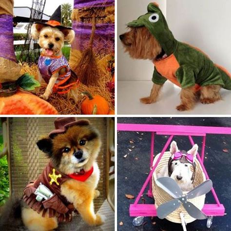 Halloween Projects Crafts Cute Dogs Halloween Projects