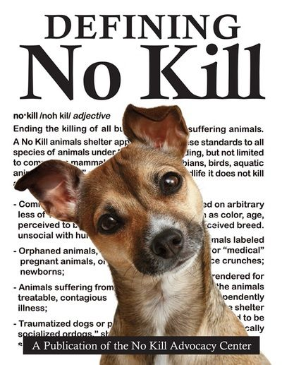 No Kill Advocacy Center Home No Kill Animal Shelter Animal Shelter Foster Dog