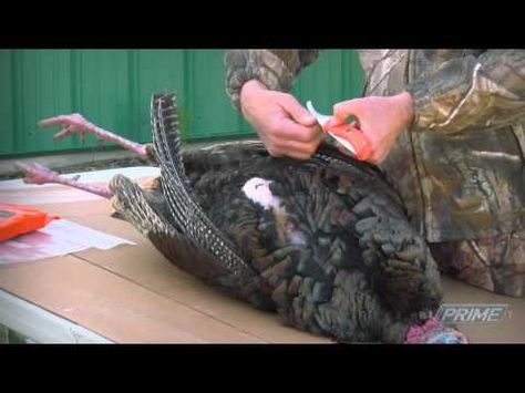 Easily Field Dress A Wild Turkey! How To Quickly Remove The Breast ...