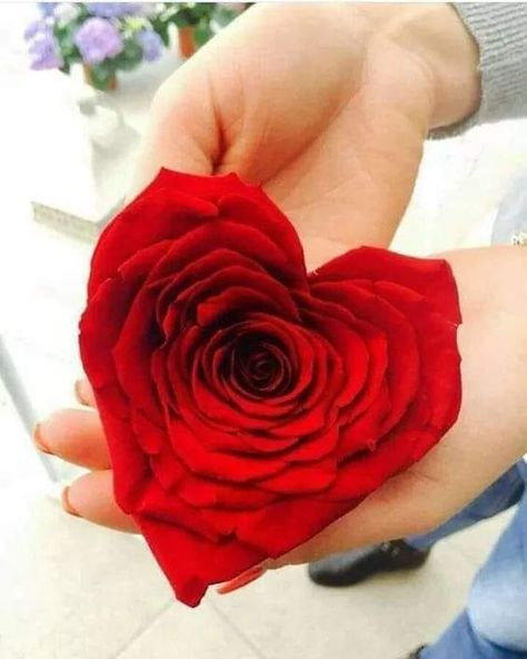 الحب ليس حروف فوق سطــور ولا كلمات بلغة العيـــــون ولا كلام رقيق ومعسول ولا انك تظهر بطبعك انك علي حبيب Rosas Lindas Rosas Vermelhas Flores Com Carinho
