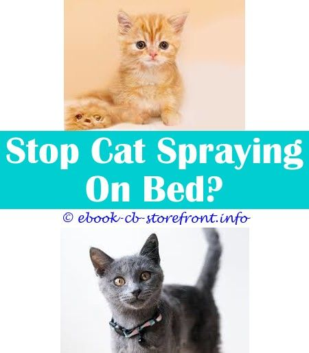 9 Thankful Cool Tricks How Do I Get Cat Spray Out Of Carpet Can I Spray Nursing Cat With Adams Flea Spray Cat With A Crown Spray Paint Sticker Homemad Admirable