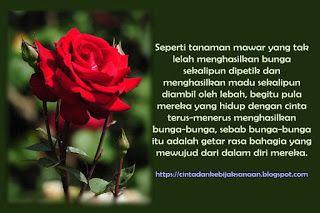 Cinta Dan Kebijaksanaan Bunga Cinta Bunga Cinta Cinta Adalah