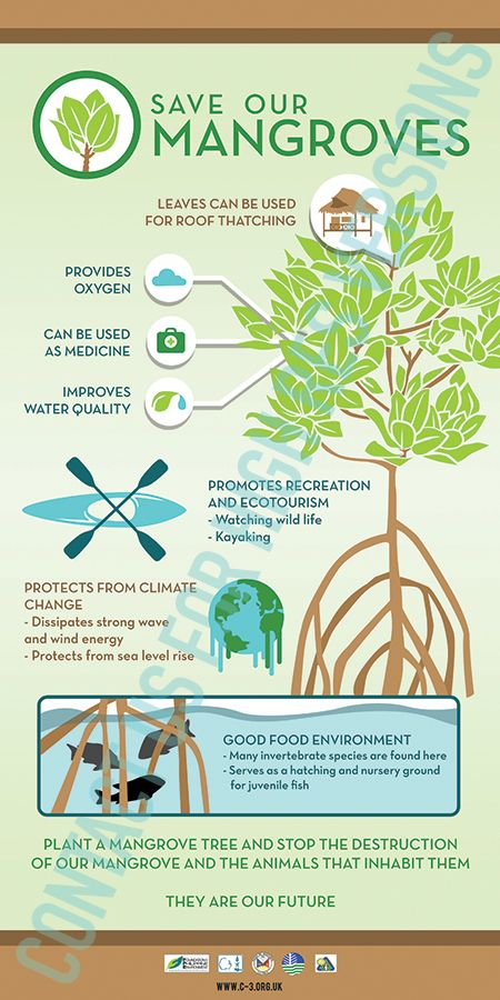 Save Our Mangroves Poster By C3 Philippines For High Resolution