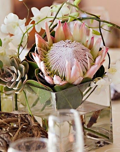 A Passion For Proteas Protea Flower