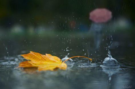 погода в петергофе завтра — Рамблер/картинки