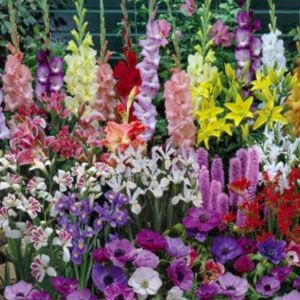 Beautiful 5 Gladiolus Flower Ideas For Your Garden