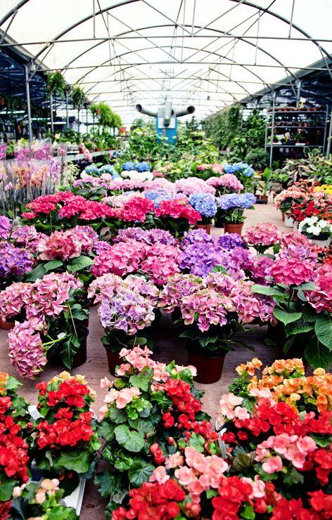 The Benefits Of Shopping At A Local Garden Center Garden Stock