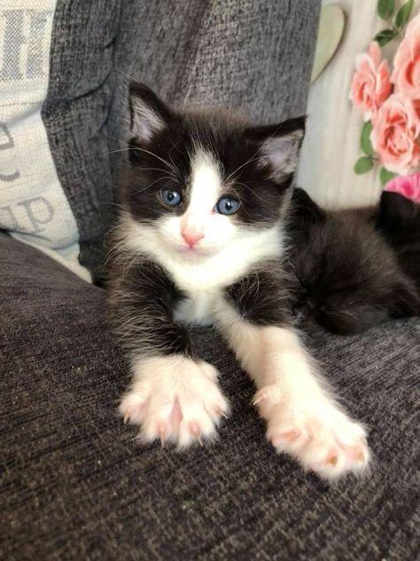 60 Black And White Female Cat Names Best Cat Names White Kittens Cats Kittens Kittens