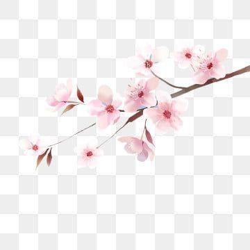 الرسوم التوضيحية لأزهار الكرز اليابانية أقحوان مشمس اليابان Png وملف Psd للتحميل مجانا In 2020 Japanese Cherry Blossom Cherry Blossom Cherry Blossom Petals
